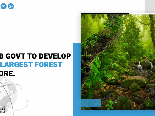 Asia's Largest Forest